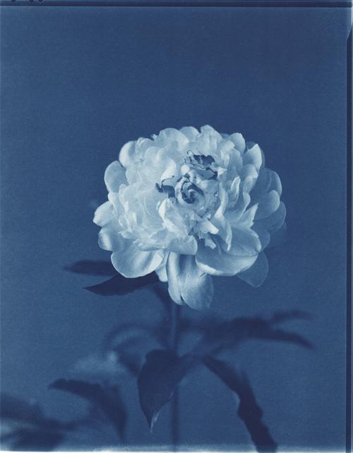 , 'Peonia,' 1998, Holden Luntz Gallery