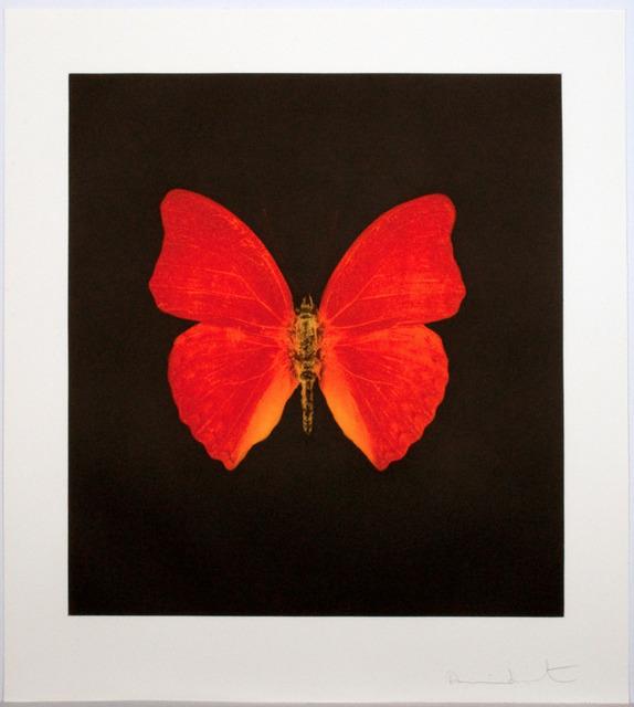 Damien Hirst, 'Damien Hirst, Memento - Orange Big Butterfly', 2008, Oliver Cole Gallery