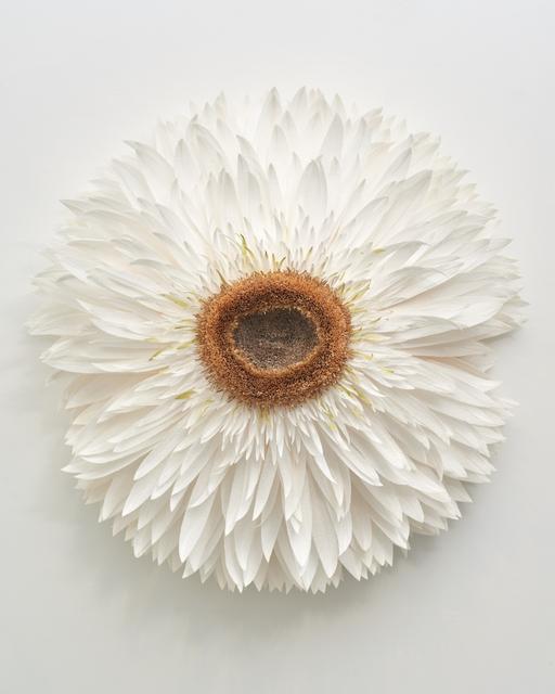 , 'Specimen F (Strawflower) ,' 2019, Eleanor Harwood Gallery