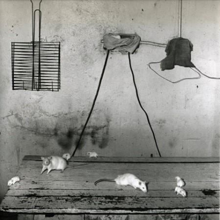 , 'Rats on kitchen table,' 1999, Elizabeth Houston Gallery