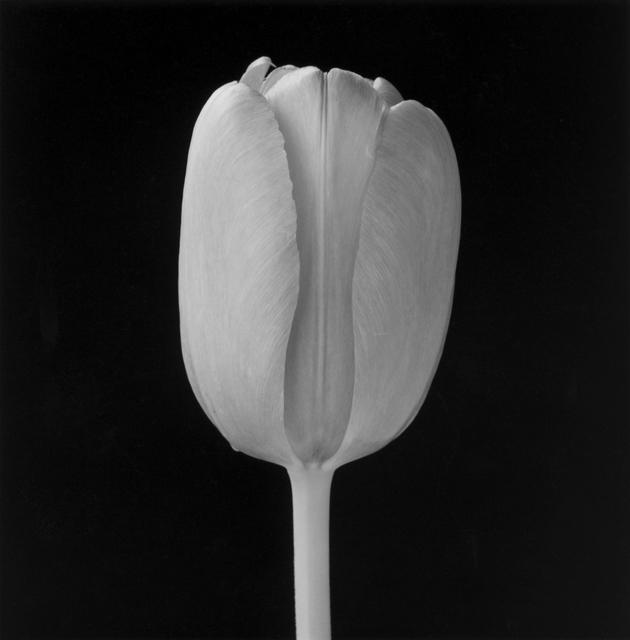 , 'Tulip,' 1988, Munch Museum