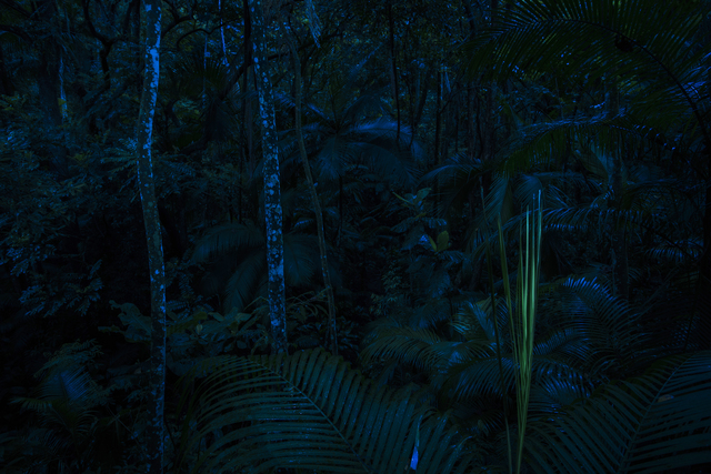 , 'Day for night ,' 2014, Mendes Wood DM