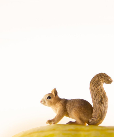 , 'Squash the Squirrel,' , ArtStar