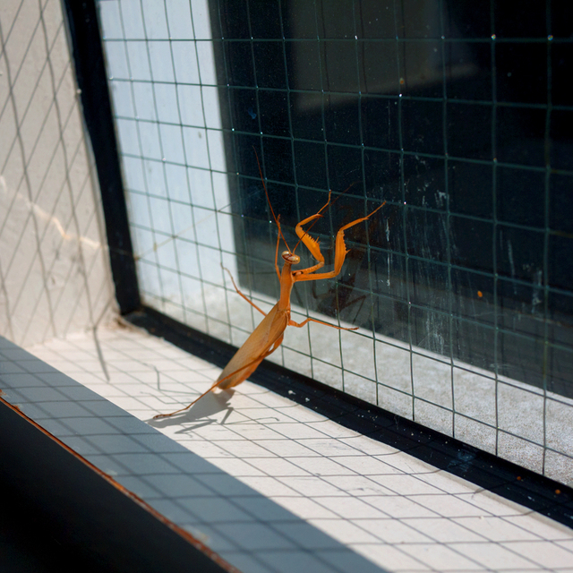 , 'TDTDC 66 (Praying Mantis),' 2010, photo-eye Gallery