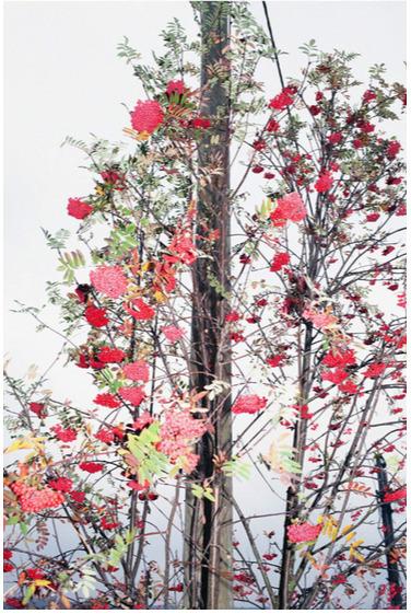 , 'Japan,' , Galerie Kandlhofer
