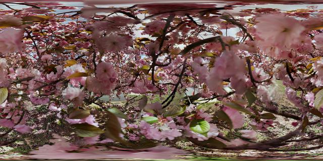 "Jason Horowitz, '""Cherry Blossoms, Washington, DC""', 2018, Curator's Office"