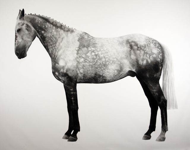 , 'Horse ,' 2018, Purdy Hicks Gallery