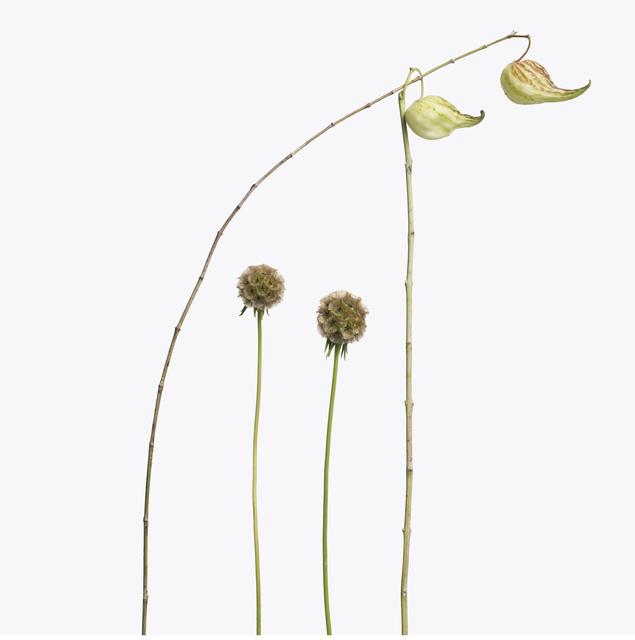 , '2 Scabiosa, 2 Fritallaria Pods,' 2013, Gagosian Gallery