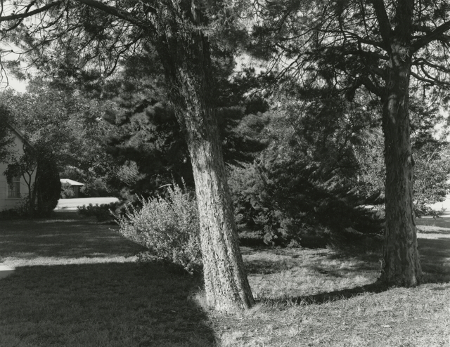 Frank Gohlke, 'Cedar Trees in the Side Yard - 2201 Wenonah, Wichita Falls, Texas', 1978/2016, Gallery Luisotti