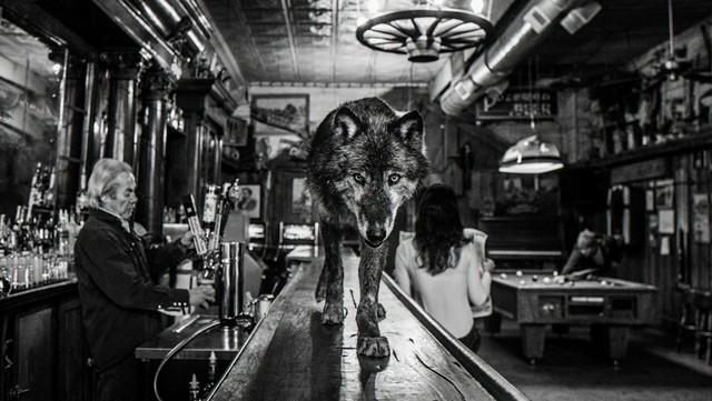 , 'Wolf of Main Street III,' 2015, Isabella Garrucho Fine Art