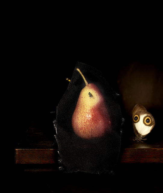 , 'Still life with Pear and Housefly,' 2014, .M Contemporary Sydney