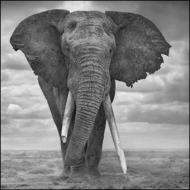 , 'Elephant Sails,' 2008, Edwynn Houk Gallery
