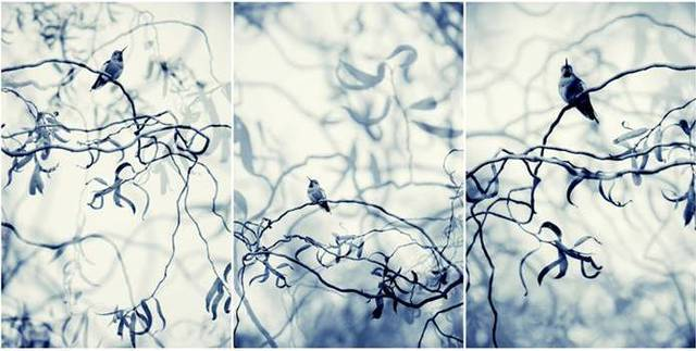 Thea Schrack, 'Blue Willows Triptych', 2010, Julie Nester Gallery