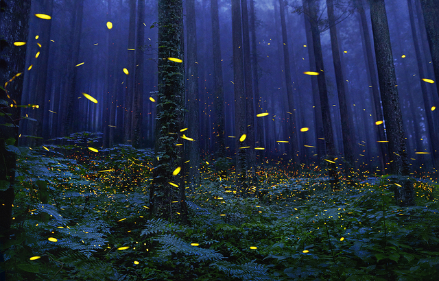 , 'Fireflies,' 2017, Osborne Samuel