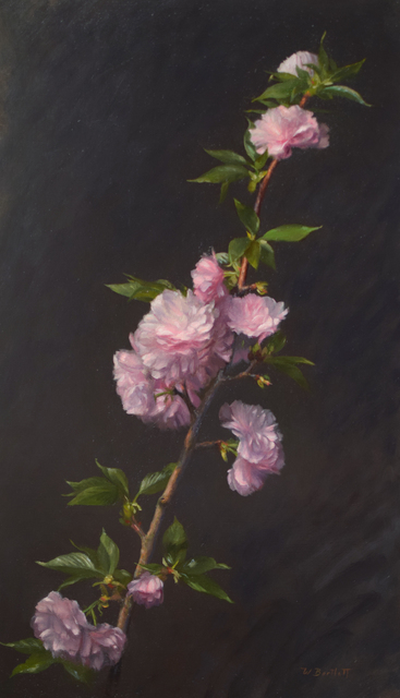 William Bartlett, 'Cherry Blossoms', ca. 2019, Painting, Oil, The Guild of Boston Artists