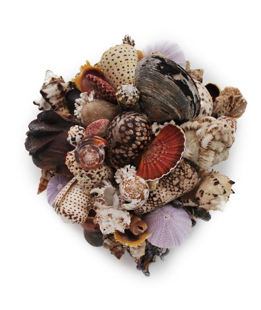 , 'Small Shell Series 38,' 2011, Bill Lowe Gallery