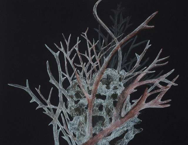 , 'Small Bleached Coral 2,' 2017, Childs Gallery