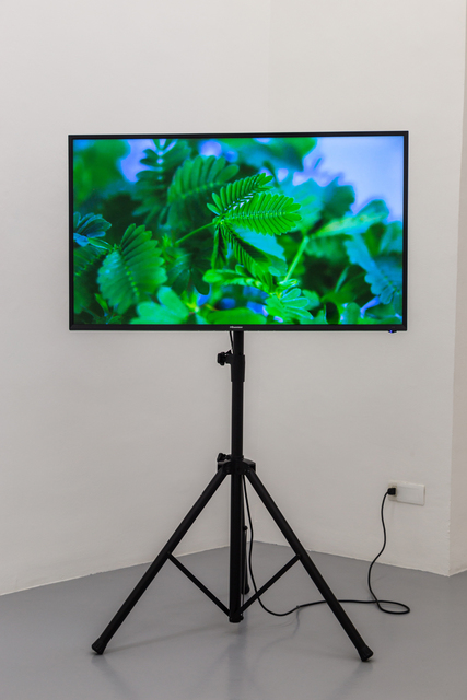 , 'The Pudic Relation Between Machine and Plant,' 2016, Umberto Di Marino