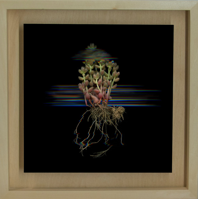 Márk Martinkó, 'Digitized Plants No.11', 2014, MyMuseum