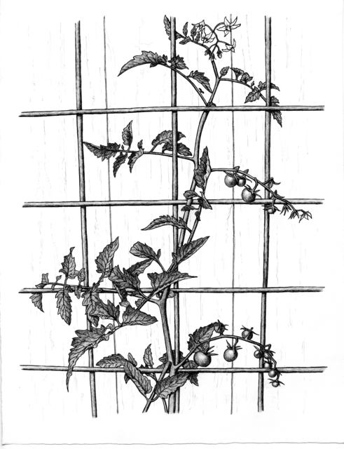 Patricia Curtan, 'Sungold Trellis', 2012, Drawing, Collage or other Work on Paper, Graphite and ink, Paulson Fontaine Press