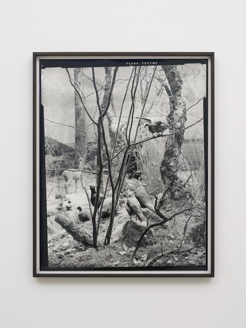 Gerard Byrne (b. 1969), 'Eurasian Jay - Fourth beast', 2018, Photography, Analogue silver gelatin print, Galerie Nordenhake