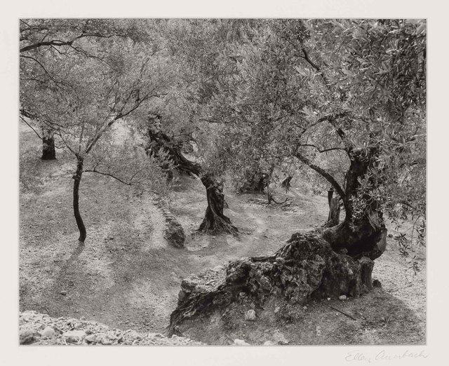 Ellen Auerbach, 'Olive Grove, Mallorca', 1959, Doyle