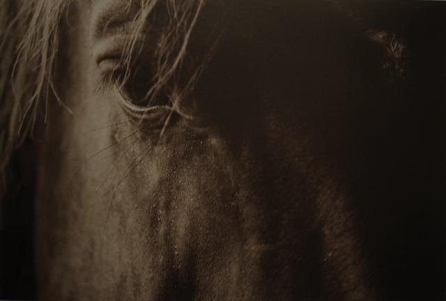 Jack Spencer, 'Beast 33/50', Gail Severn Gallery
