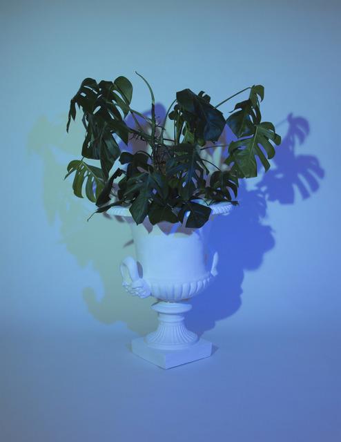 , 'Plant I,' 2014, Christine Park Gallery