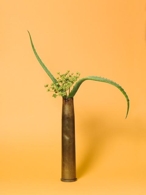 , 'The Kept Woman, Aloe (Aloe sp.),' 2015-ongoing, Denny Dimin Gallery