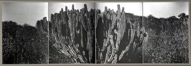 , 'Book VI, b,' 2016, Anémona Editores