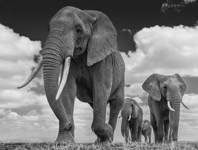 David Yarrow, 'The Garrison', ca. 2016, Isabella Garrucho Fine Art