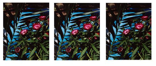 , 'Strawflowers,' 2013, KÖNIG GALERIE