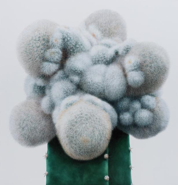 , 'Cactus No.95,' 2015, Johyun Gallery