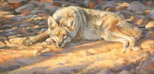 , 'Resting Coyote,' , Sorrel Sky Gallery