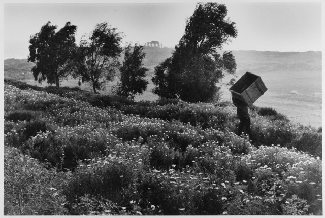 , 'Man carries empty box up hill, Sicily, Italy ,' 1975, Gallery 270
