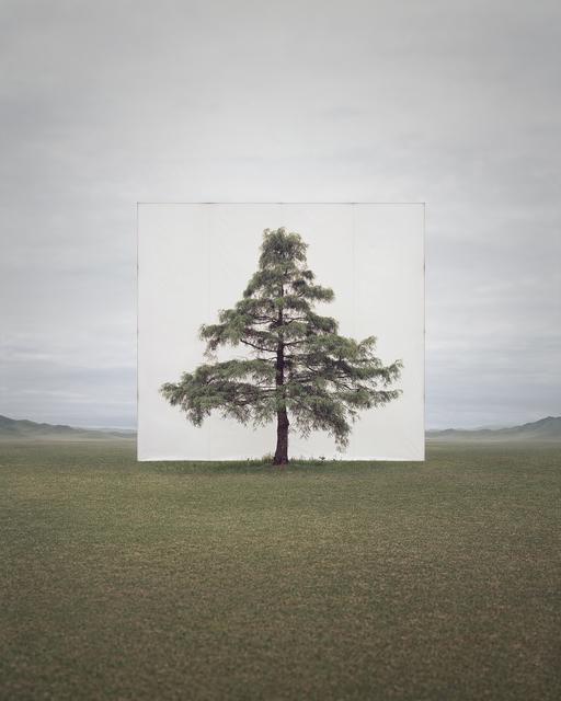 , 'Tree... #6,' 2014, Savina Museum of Contemporary Art