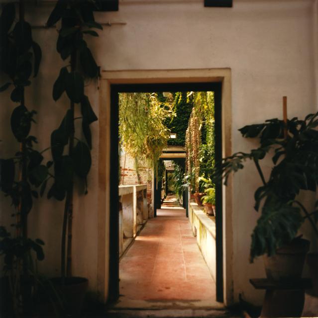 , 'Padua Botanical 18,' 2013, Newzones