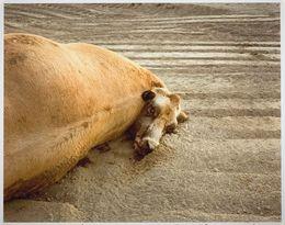 , 'Dead Animals #454,' 1988, Robert Mann Gallery