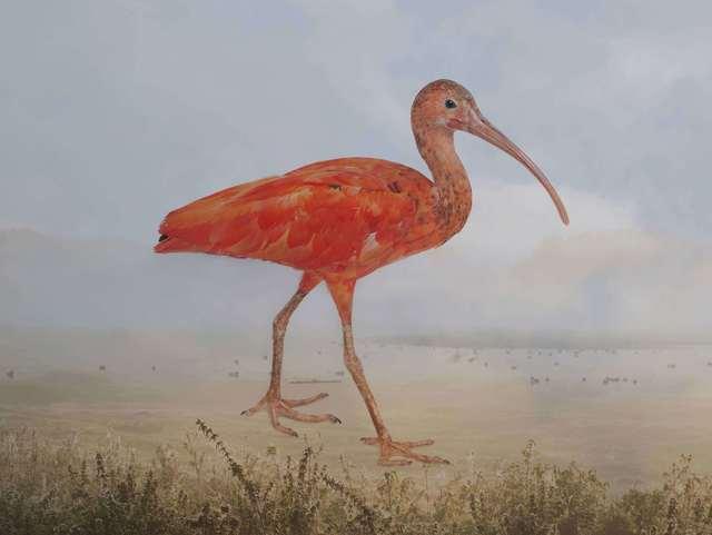 , 'Scarlet, ibis,' 2016, ILEX Gallery