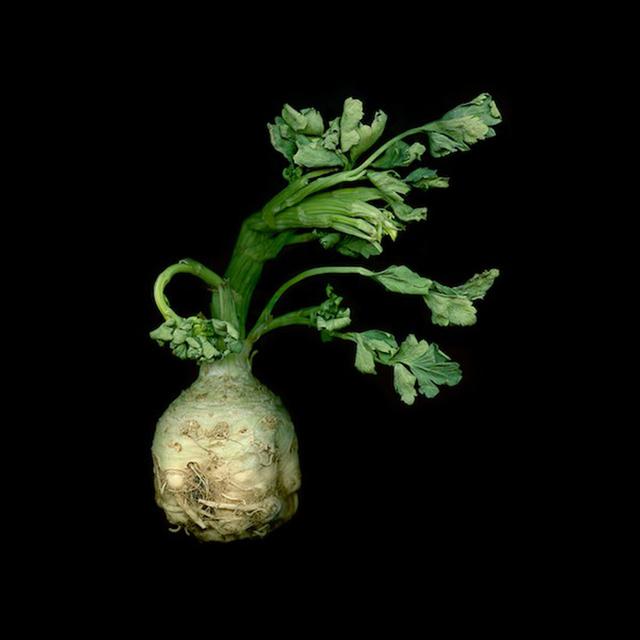 , 'Celeriac 116,' 2012-2013, Carrie Haddad Gallery