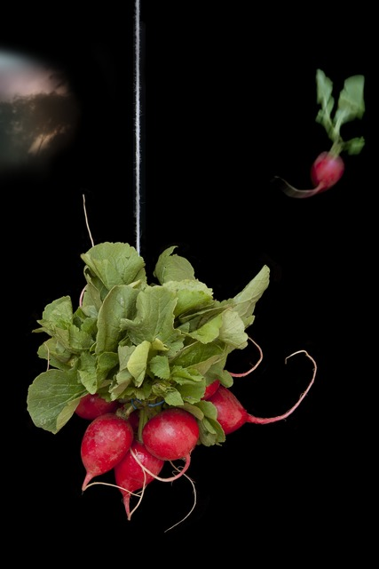 , 'Radishes,' 2011, Robert Klein Gallery