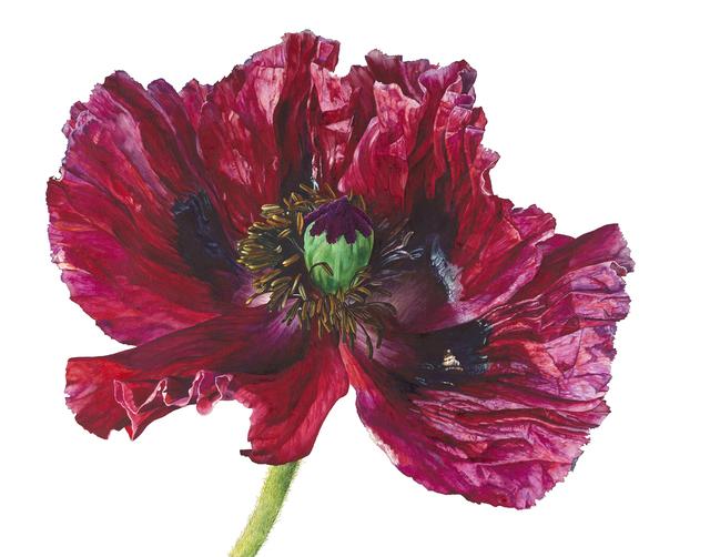 , 'Red Poppy,' , Jonathan Cooper