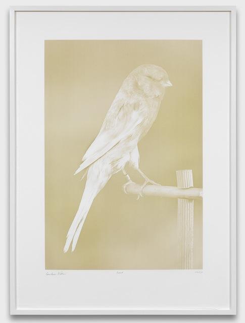 Carsten Höller, 'Canaries (1)', 2009, Gagosian
