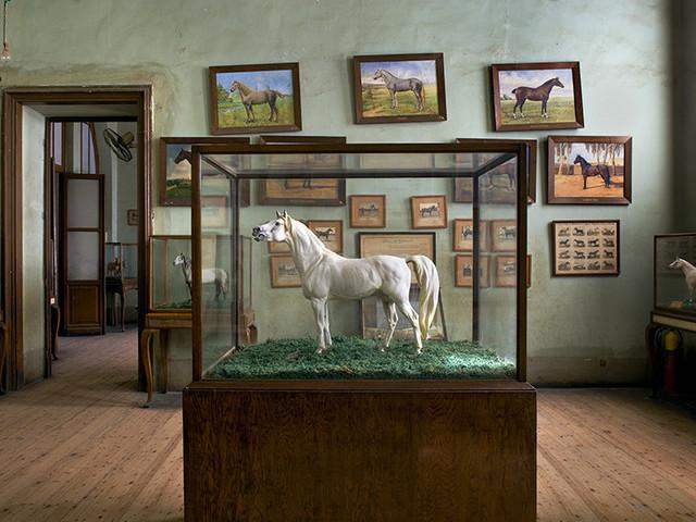 Richard Barnes, 'Horse & Horse Paintings, Cairo ', 2009, Bau-Xi Gallery