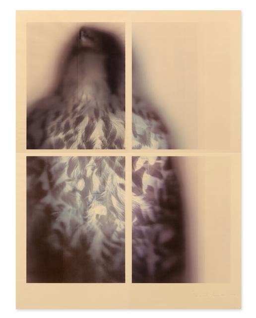 , 'Peregrine Falcon,' 2017, Gemini G.E.L. at Joni Moisant Weyl