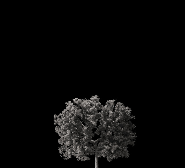 , 'Endocast of lung,' 2018, Novalis Contemporary Art