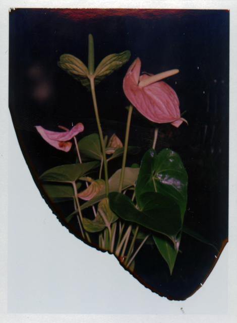Lucas Michael, 'Untitled (naturaleza viva)', 2019, Visual AIDS: Benefit Auction 2019