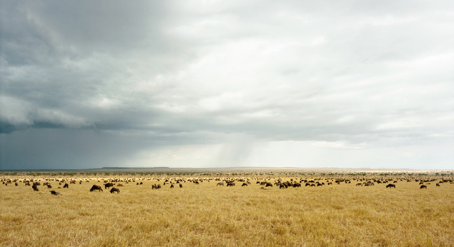 , 'Masai Mara I (Kenya),' 2009, Danziger Gallery