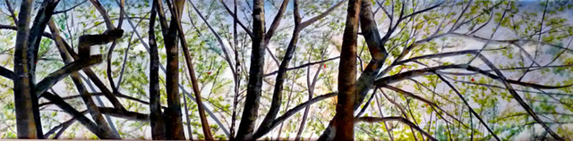 Ellen Sinel, 'Treetops in Early Spring', 2011, Painting, Oil on Canvas, Zenith Gallery