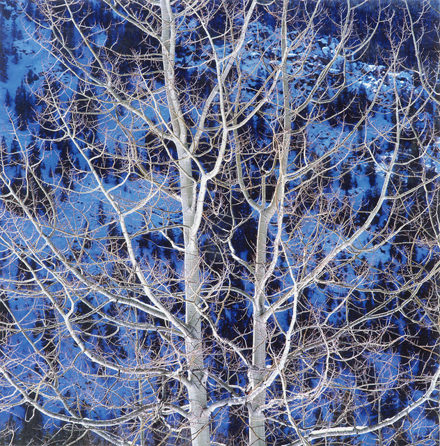 Christopher Burkett, 'Glowing Winter Aspen, Colorado', 2000, Photography, Cibachrome print, Etherton Gallery